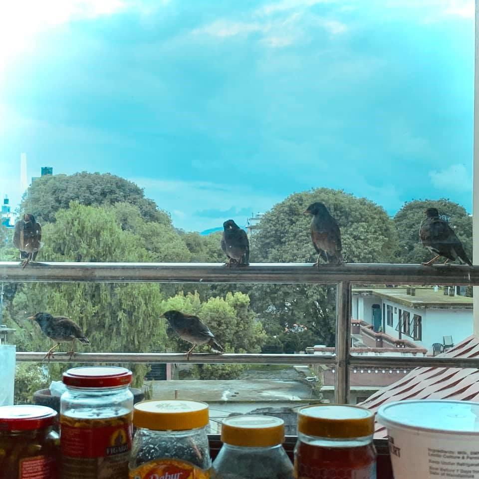 一張含有 桌, 室外, 食物, 杯子 的圖片  自動產生的描述